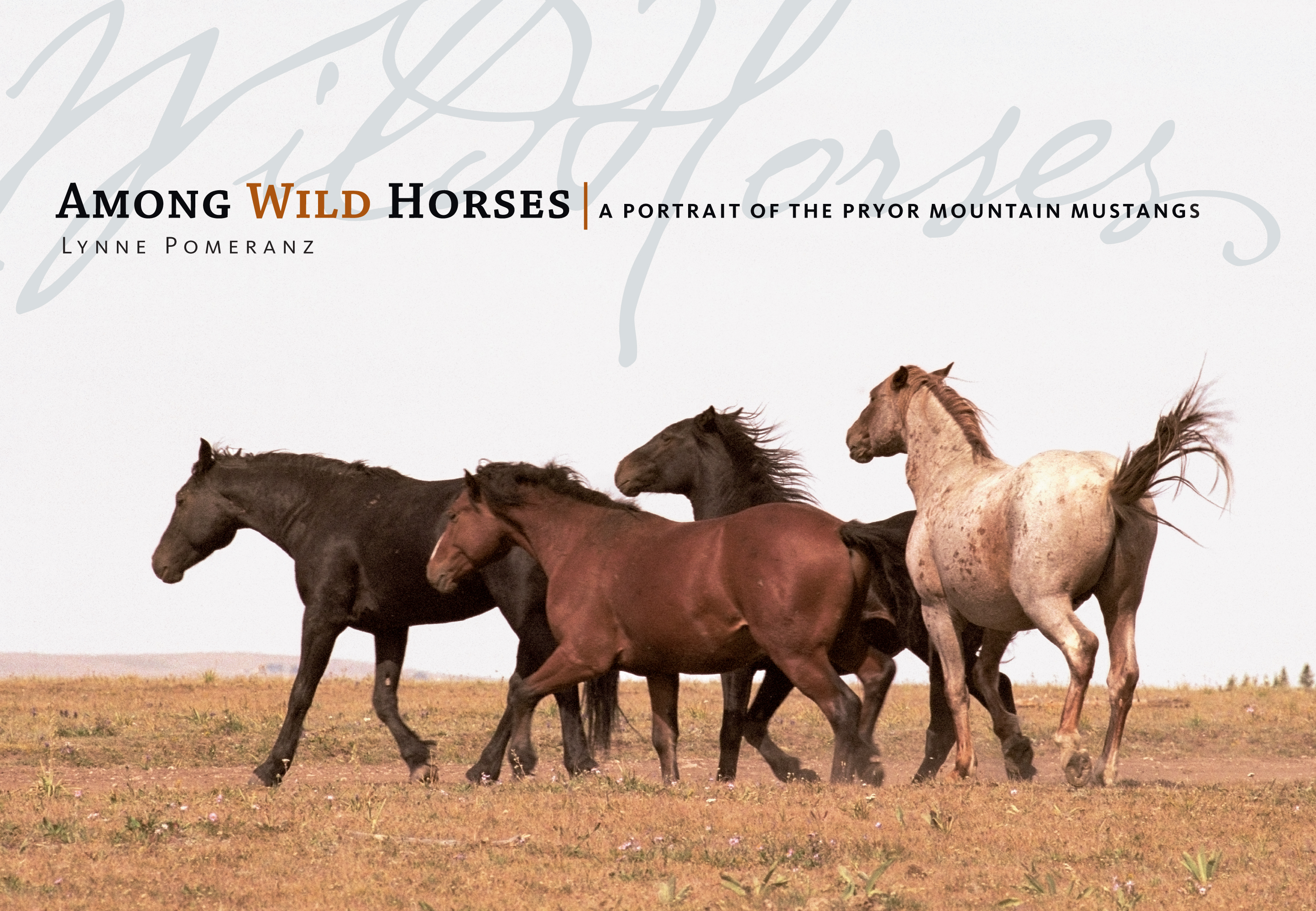 Mustang Quotes Among Wild Horses  Workman Publishing
