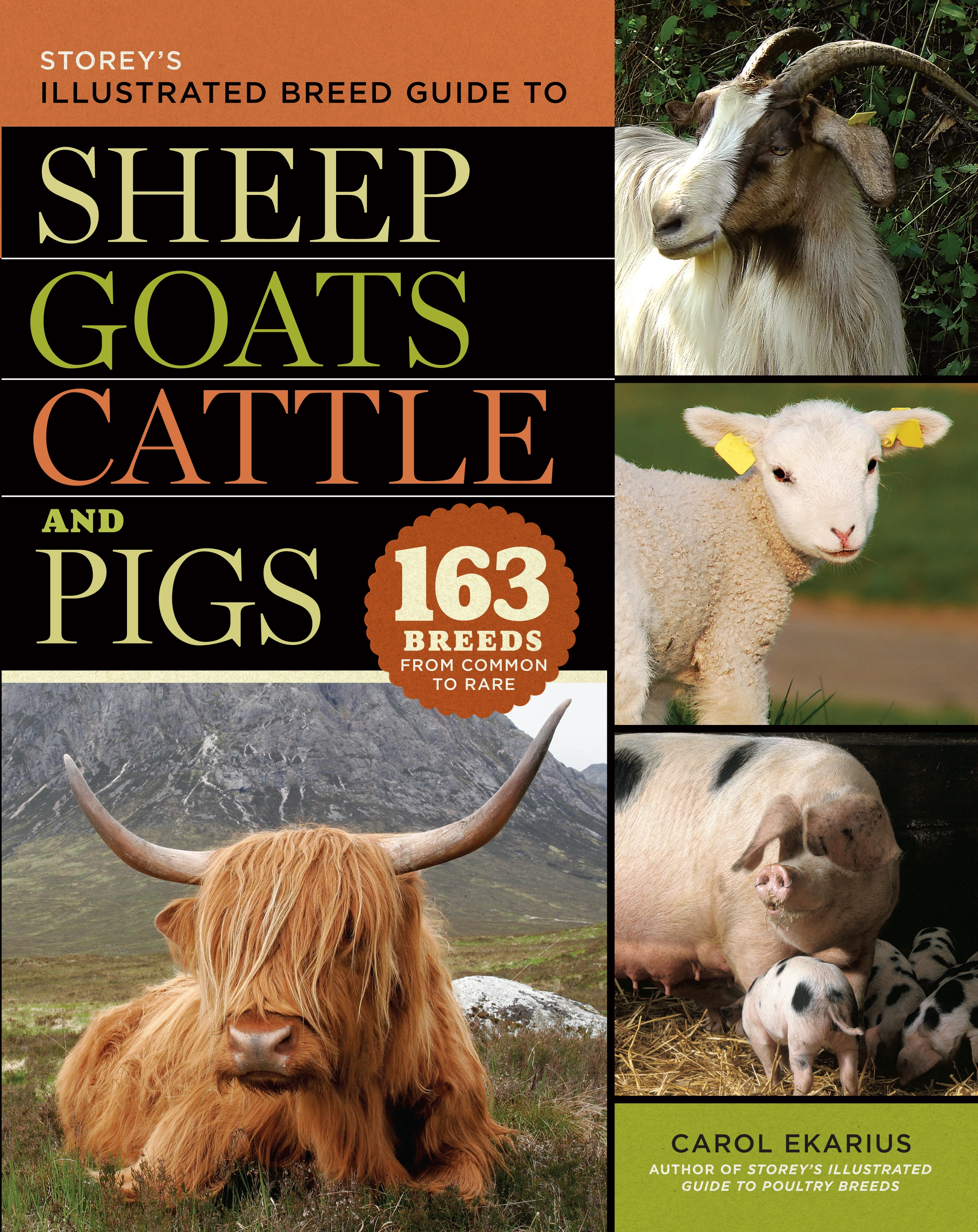 Storey's Illustrated Breed Guide to Sheep, Goats, Cattle and Pigs 163 Breeds from Common to Rare - Carol Ekarius