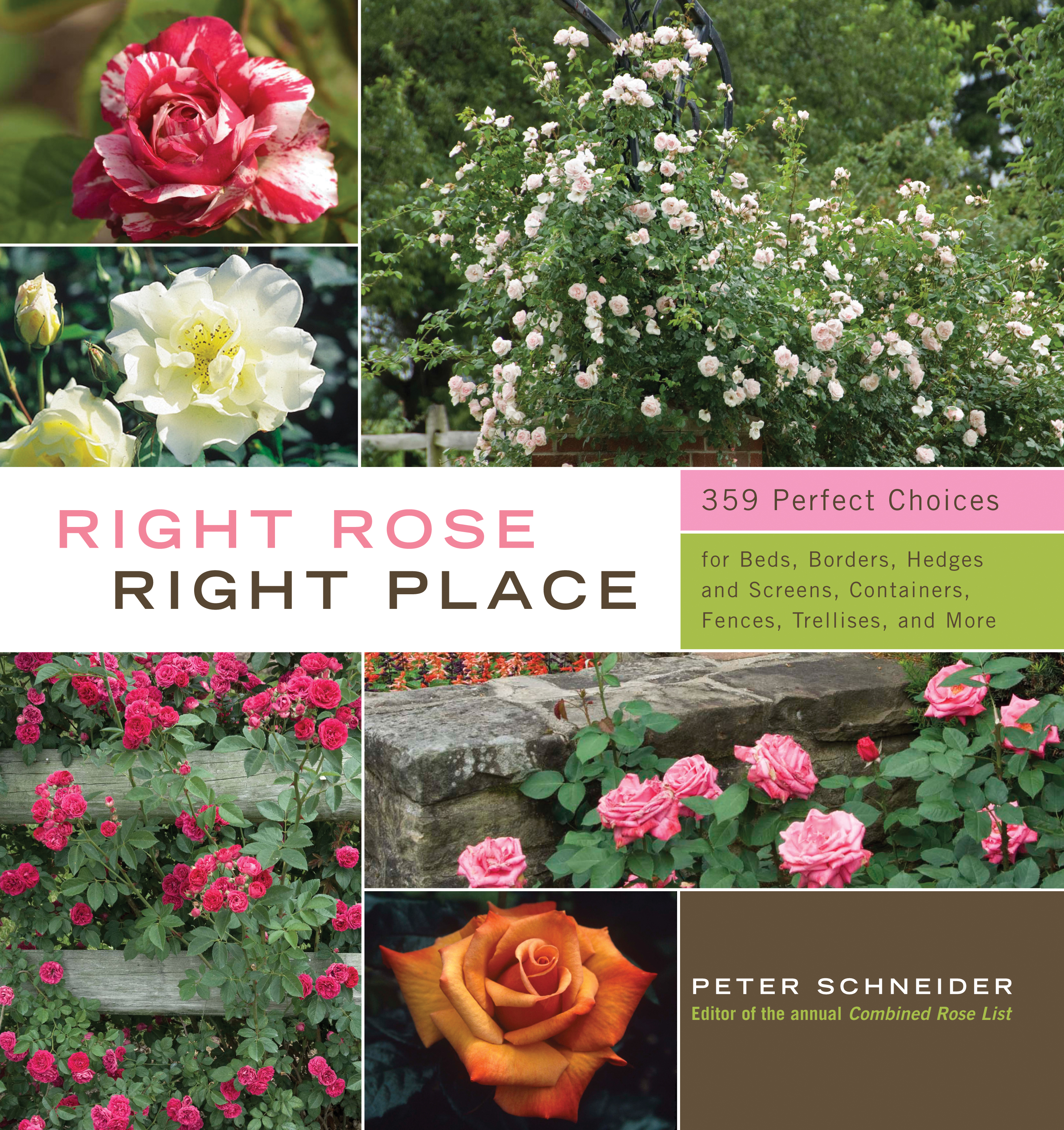 Right Rose, Right Place  - Peter Schneider