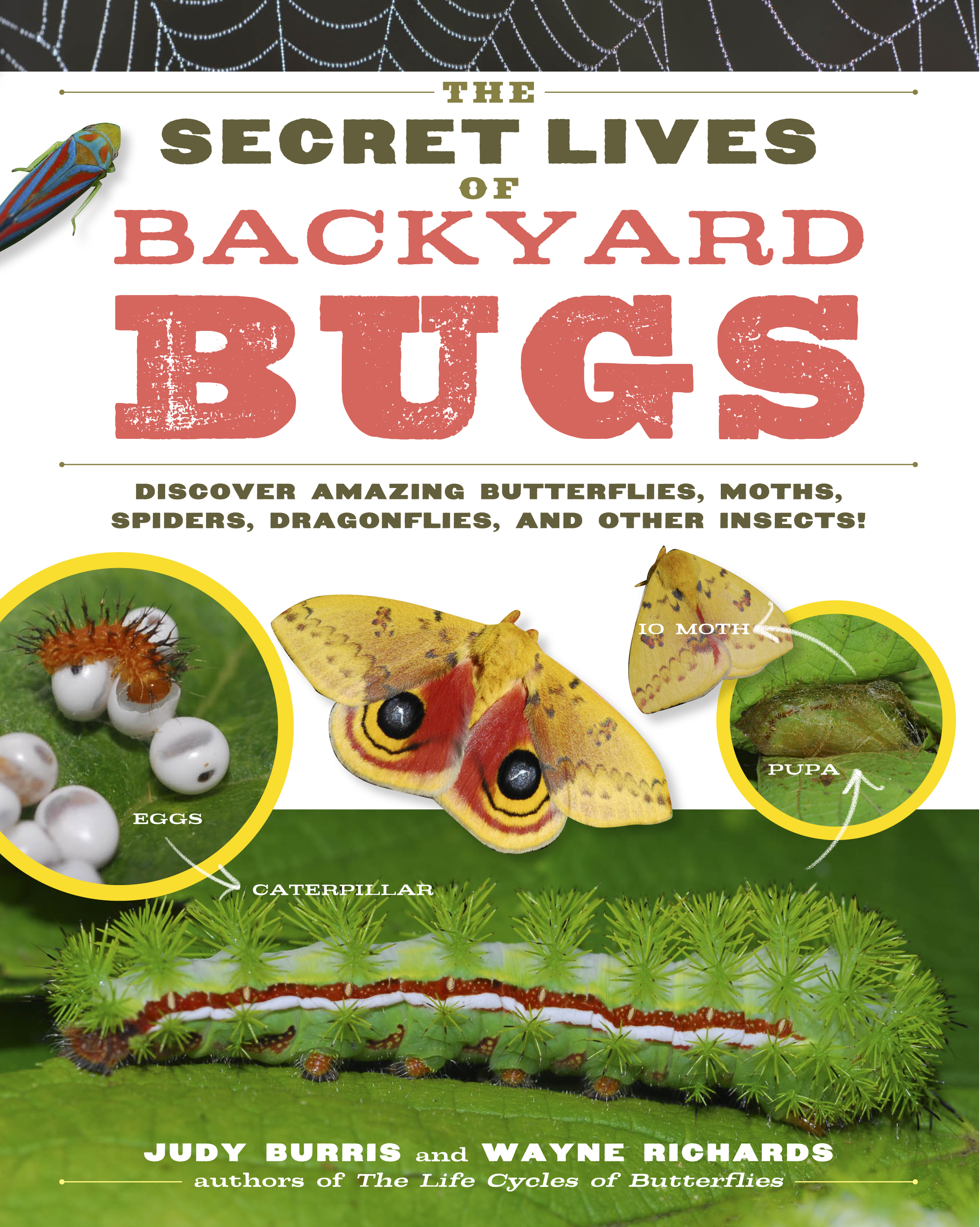 The Secret Lives of Backyard Bugs Discover Amazing Butterflies, Moths, Spiders, Dragonflies, and Other Insects! - Judy Burris
