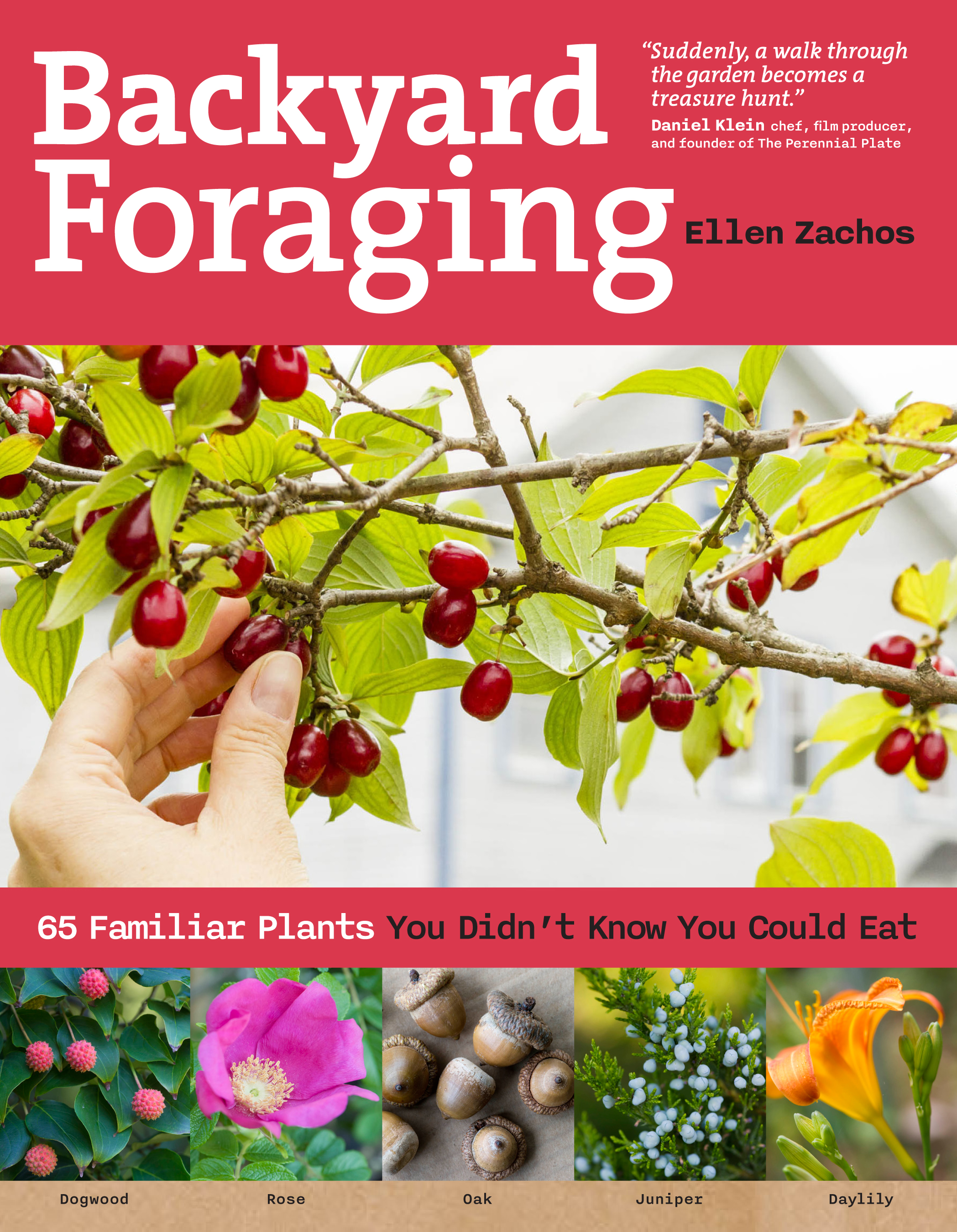 Backyard Foraging 65 Familiar Plants You Didn't Know You Could Eat - Ellen Zachos