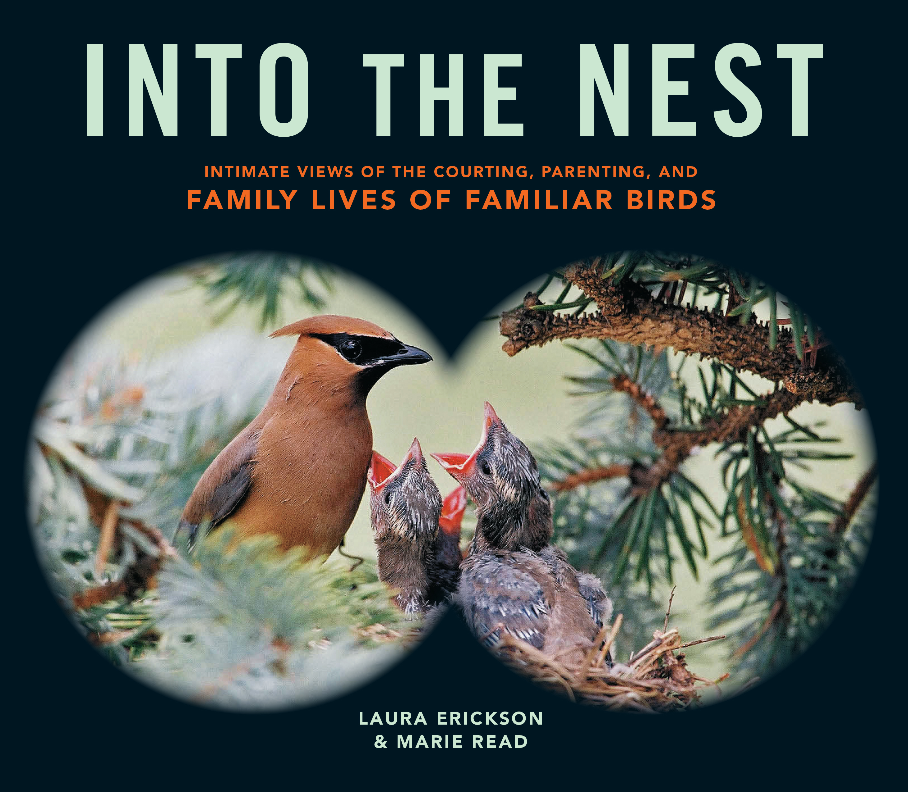 Into the Nest Intimate Views of the Courting, Parenting, and Family Lives of Familiar Birds - Laura Erickson