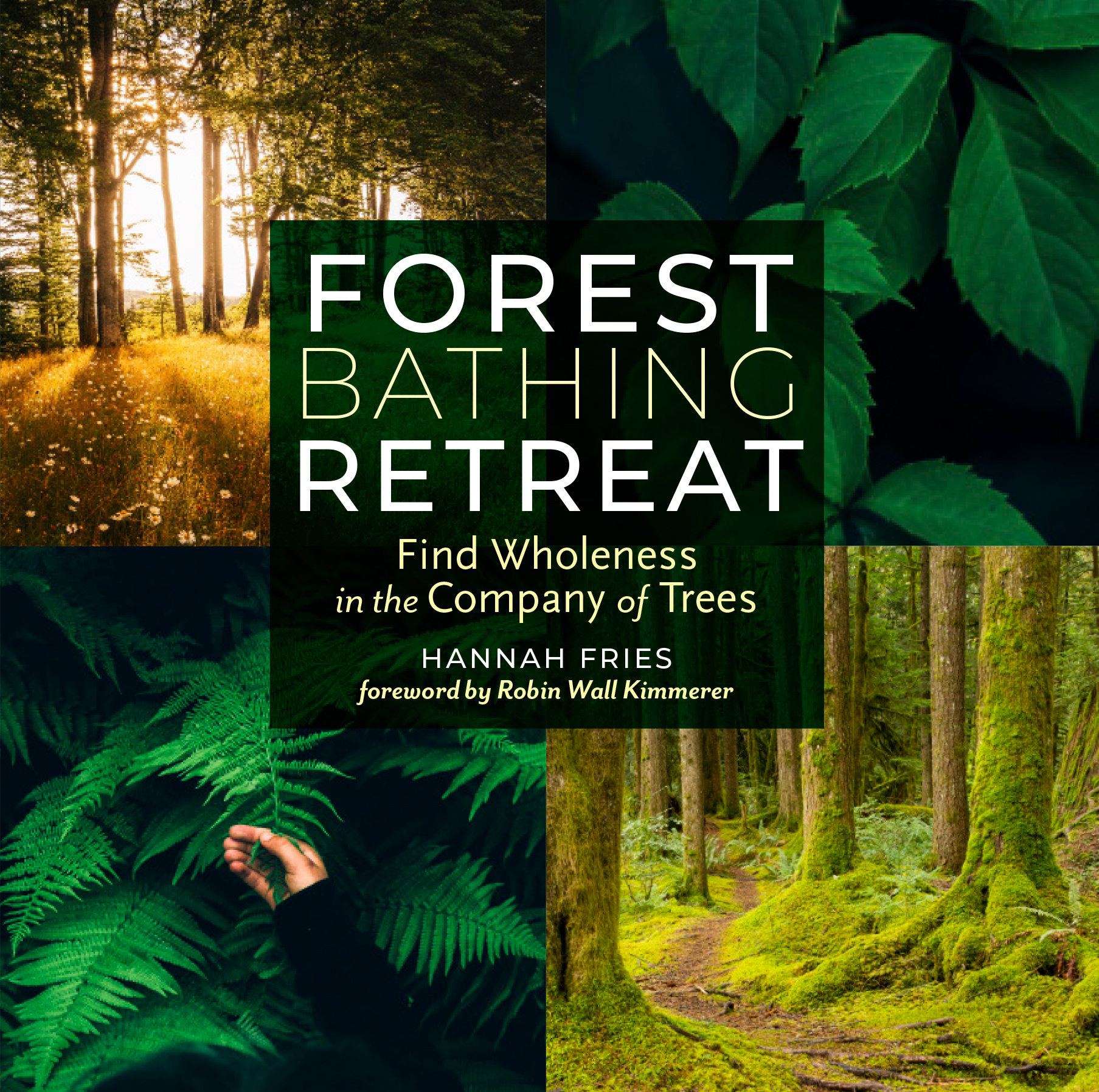 Forest Bathing Retreat Find Wholeness in the Company of Trees - Hannah Fries