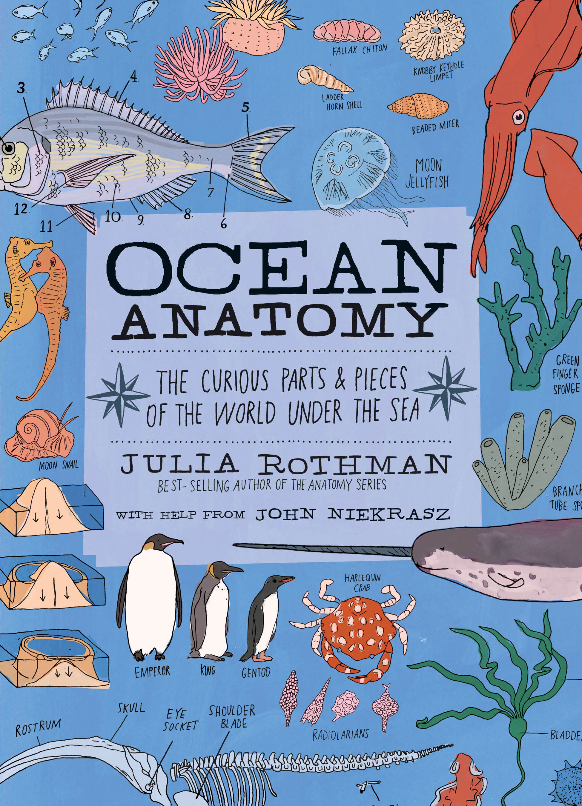 Ocean Anatomy The Curious Parts & Pieces of the World under the Sea - Julia Rothman
