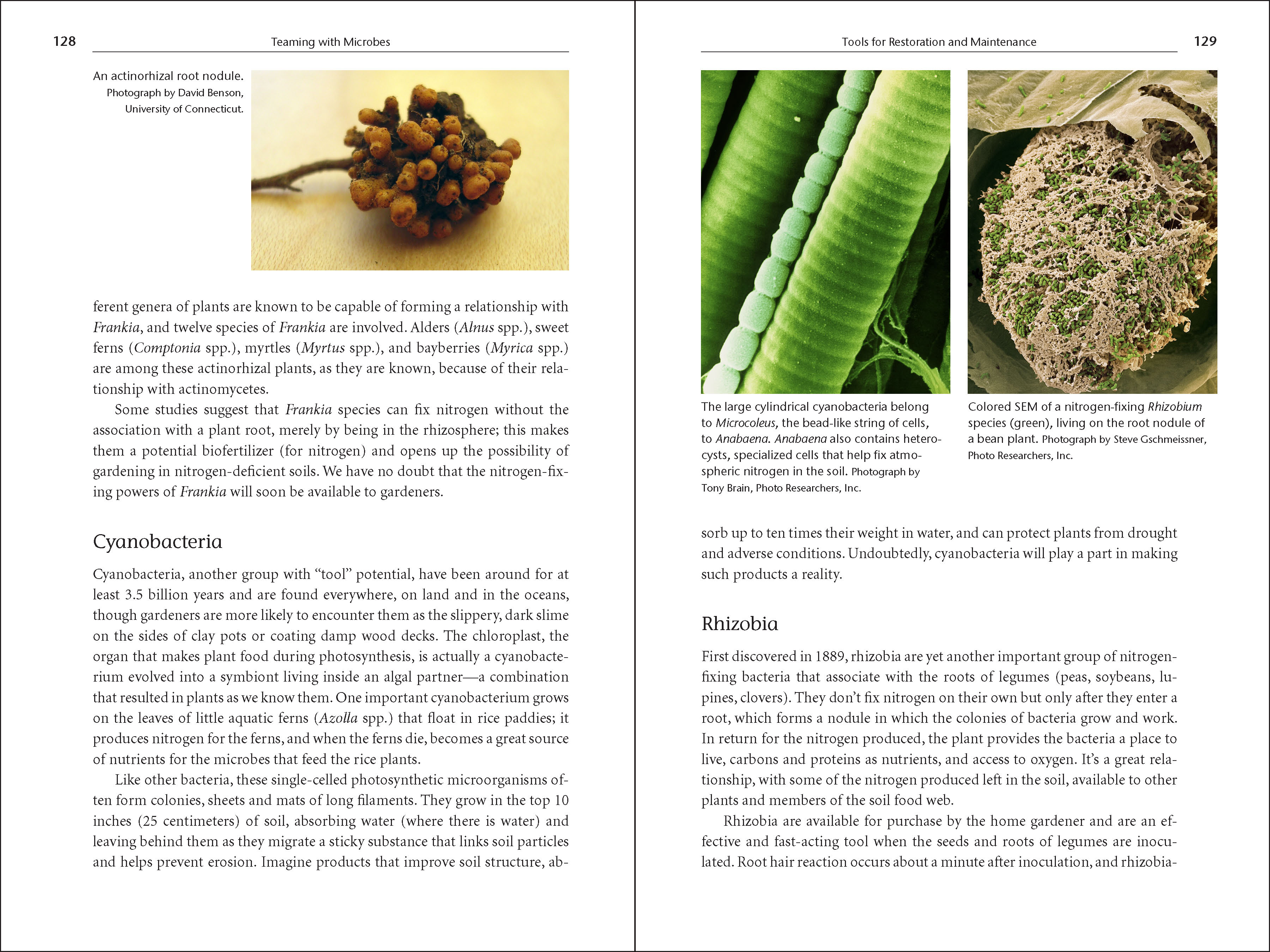 teeming with microbes pdf