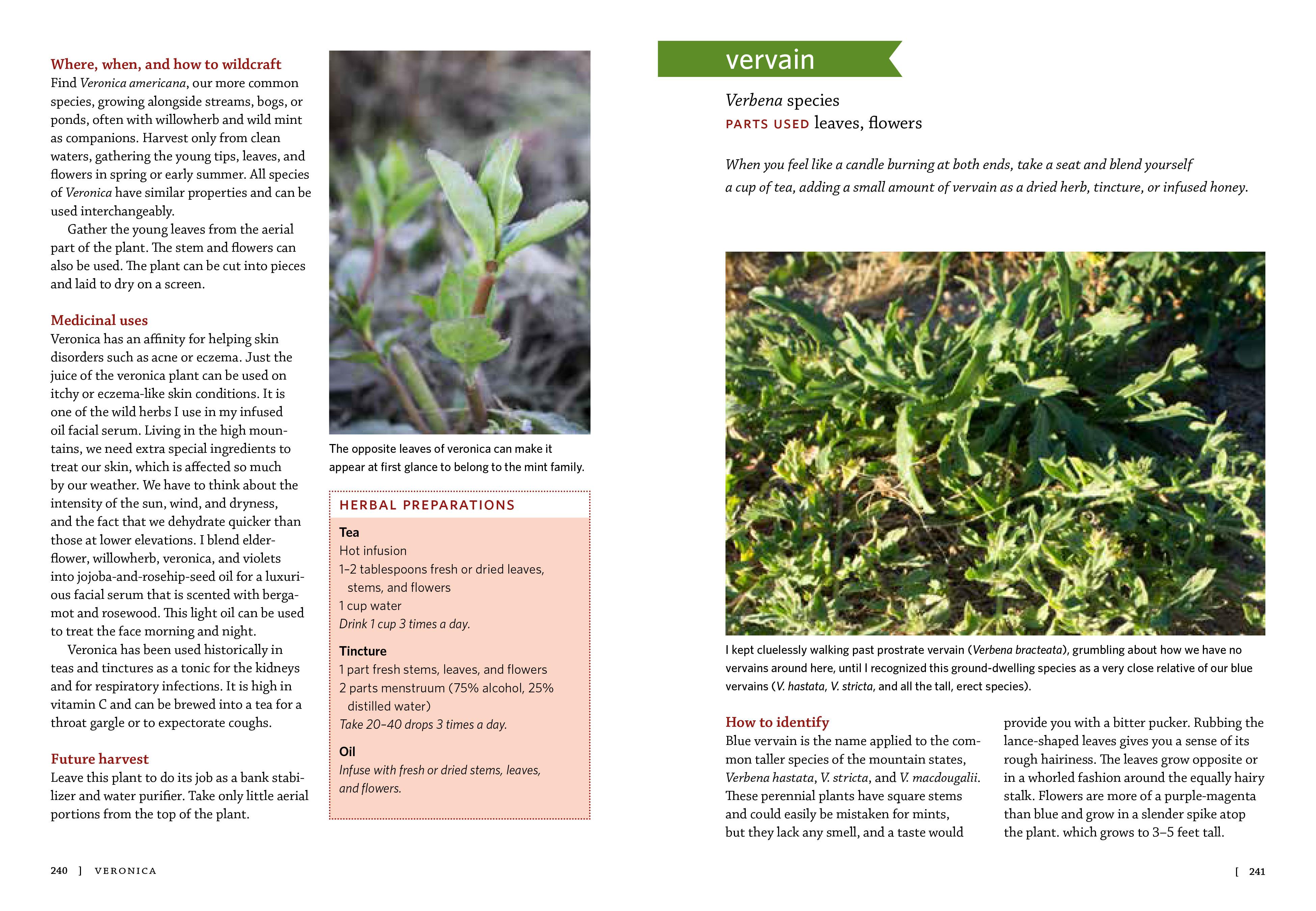 Mountain States Medicinal Plants - Workman Publishing