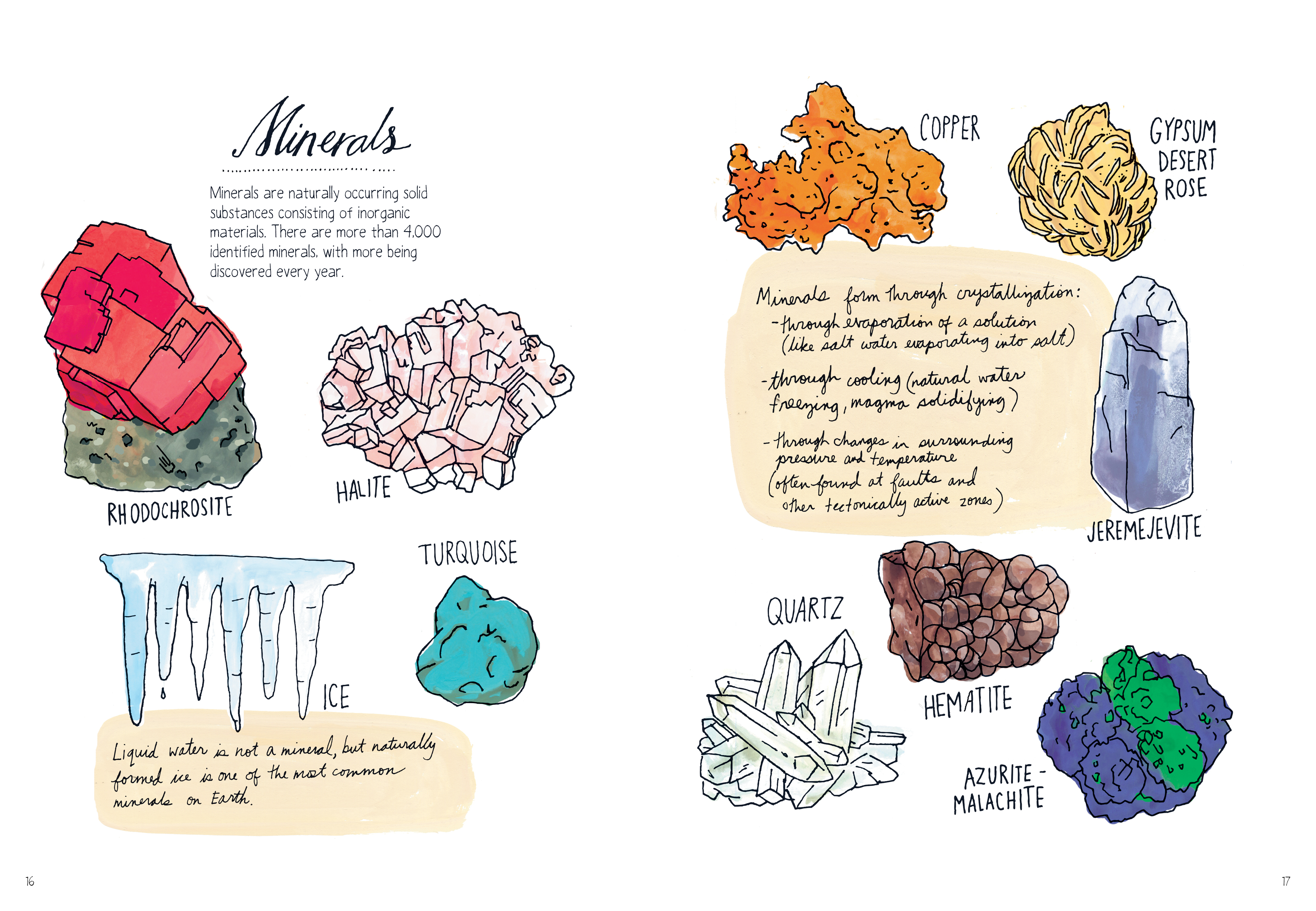 nature anatomy the curious parts and pieces of the natural world julia rothman
