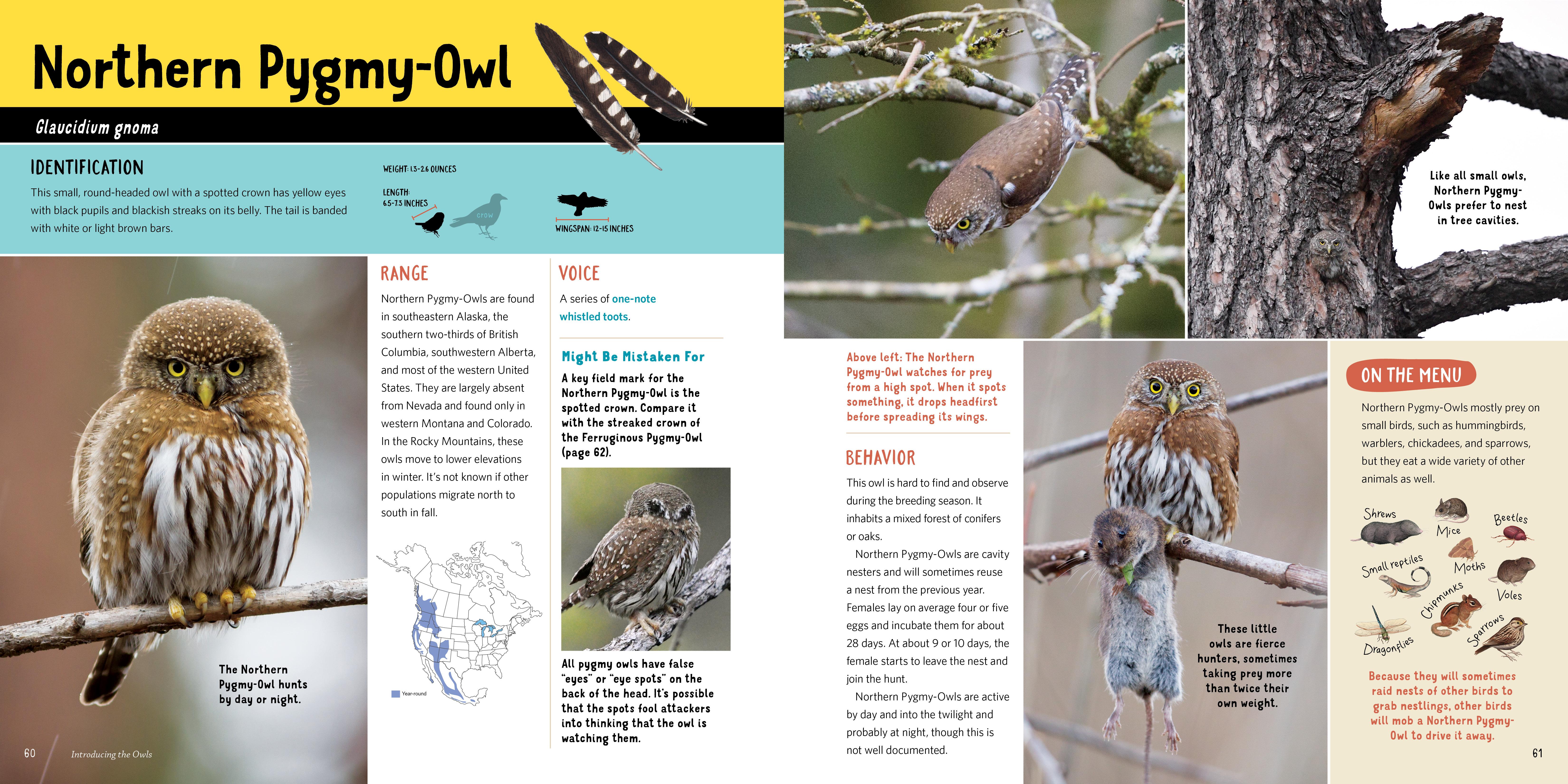Owling - Workman Publishing